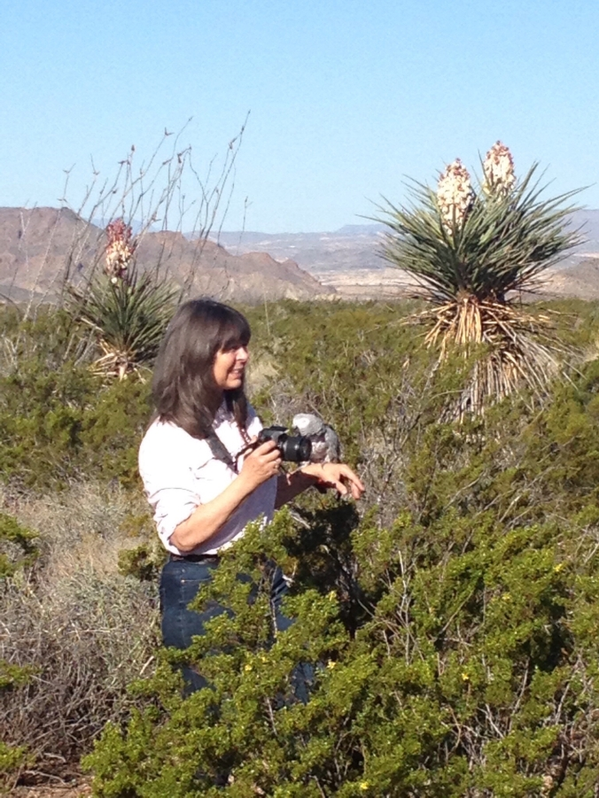 Photographing the Texas desert ( Lindy Cook Severns and companion African Grey parrot). I often paint from reference photos, but only ones that I take myself, after spending time exploring a landscape.