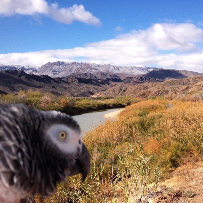 Our African Grey parrot appreciates beauty, and loves surprises too. He was on my wrist as I photographed the River Road through Big Bend Ranch State Park. I don't necessarily recommend having a large bird on your wrist when you take pics with a big digital SLR camera, but it's what we do!
