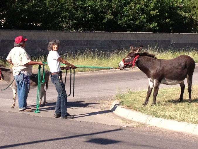 Mule slowdowns in downtown Fort Davis, Texas are much more common than traffic jams. Photo by Lindy Cook Severns.